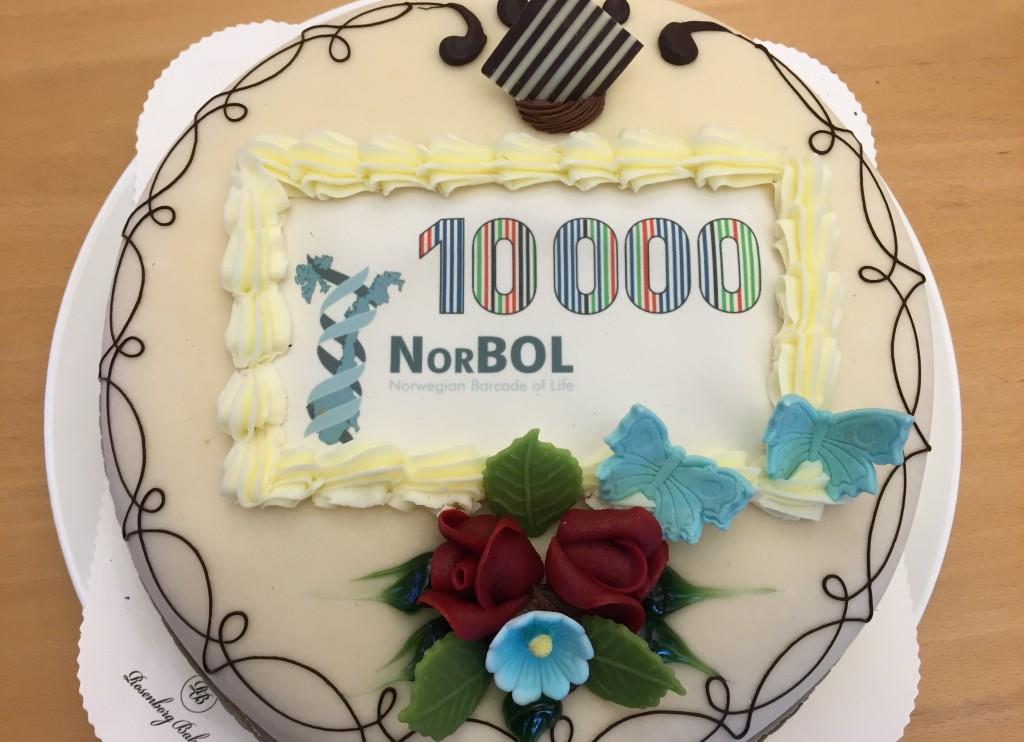 NorBOL-cake