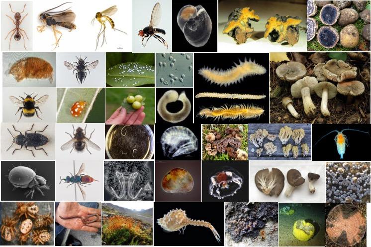 Species from NTI